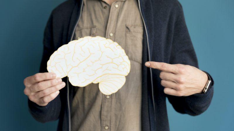 Que nous dit notre cerveau ?